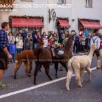desmontegada 2017 predazzo ph mauro morandini53 150x150 Desmontegada 2017 Predazzo   Le foto della sfilata