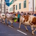 desmontegada 2017 predazzo ph mauro morandini63 150x150 Desmontegada 2017 Predazzo   Le foto della sfilata