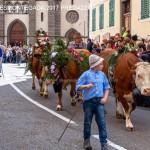 desmontegada predazzo 2017 fiemme by mauro morandini20 150x150 Desmontegada 2017 Predazzo   Le foto della sfilata