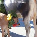 desmontegada predazzo 2017 ph teresa giacomelli2 150x150 Desmontegada 2017 Predazzo   Le foto della sfilata