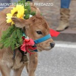 desmontegada predazzo 2017 ph teresa giacomelli26 150x150 Desmontegada 2017 Predazzo   Le foto della sfilata