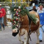 desmontegada predazzo 2017 ph teresa giacomelli55 150x150 Desmontegada 2017 Predazzo   Le foto della sfilata