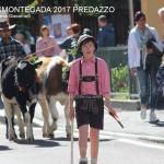 desmontegada predazzo 2017 ph teresa giacomelli6 150x150 Desmontegada 2017 Predazzo   Le foto della sfilata