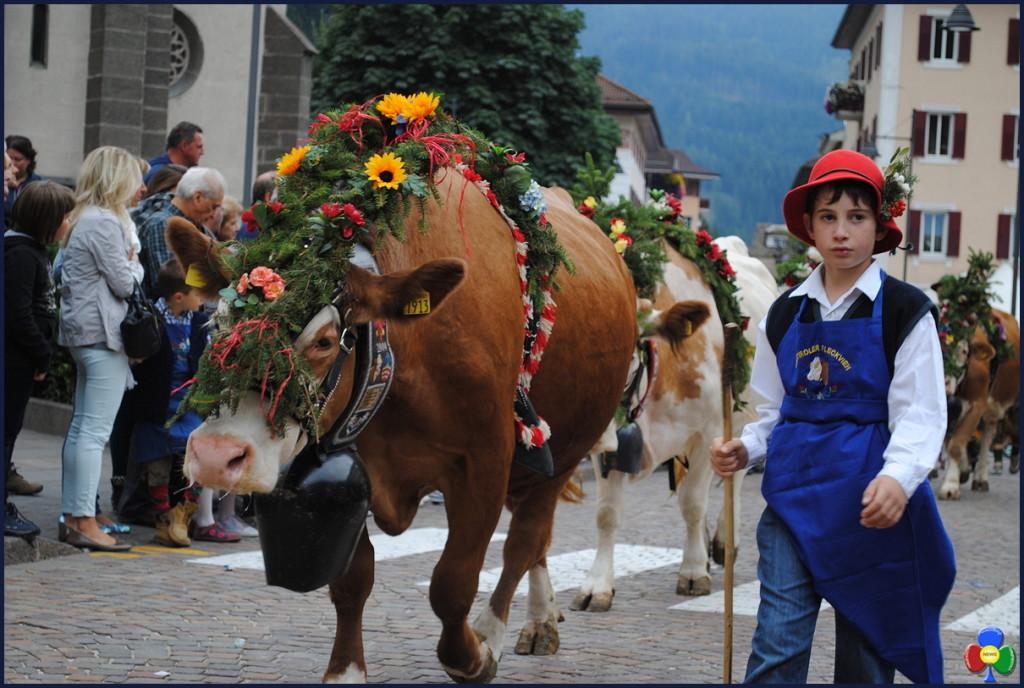 desmontegada predazzo apt 1024x688 Desmontegada e dintorni, ricco fine settimana a Predazzo