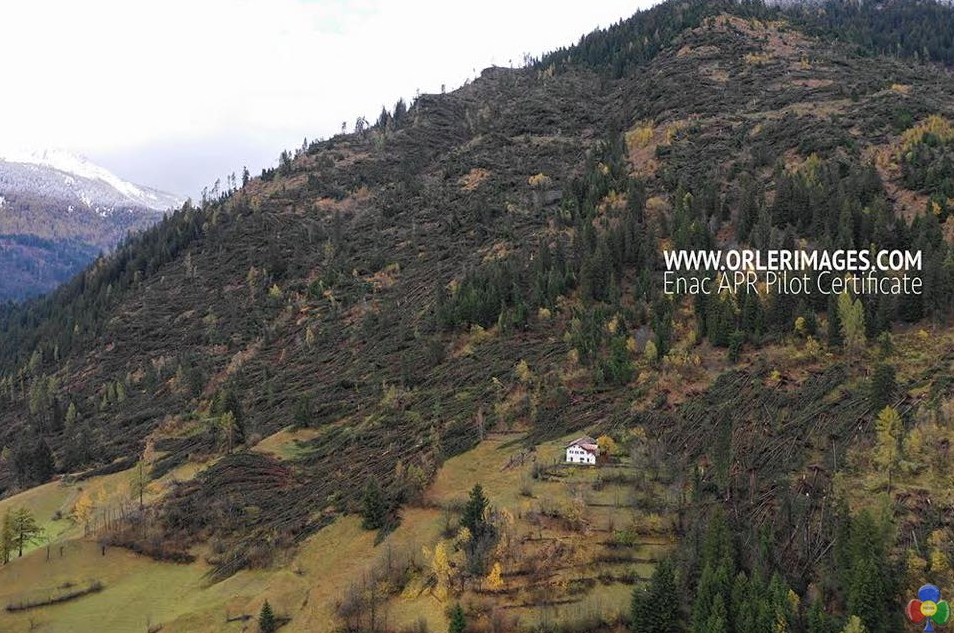 disastro bosco predazzo orler1 TEMPESTA VAIA trasforma i dintorni di Predazzo   le foto