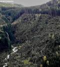 predazzo sottosassa disastro bosco