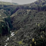 predazzo sottosassa disastro bosco 150x150 Diffondiamo insieme il profumo del bosco