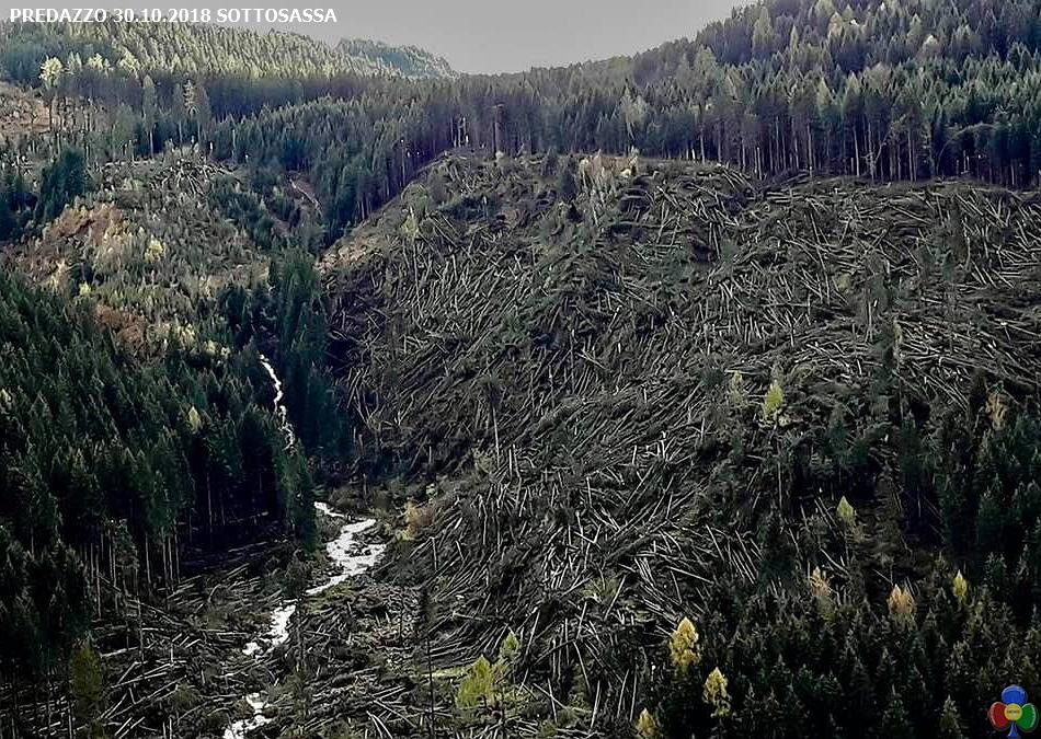 predazzo sottosassa disastro bosco Taglio del legname schiantato: un grave pericolo per gli operatori