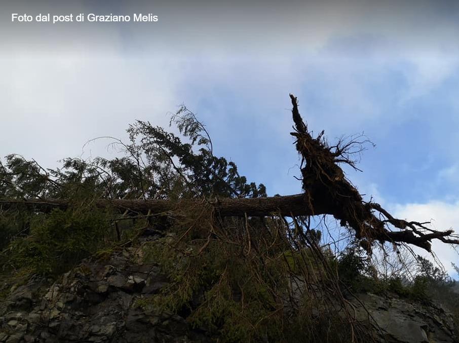 albero caduto a predazzo graziano melis Diffondiamo insieme il profumo del bosco