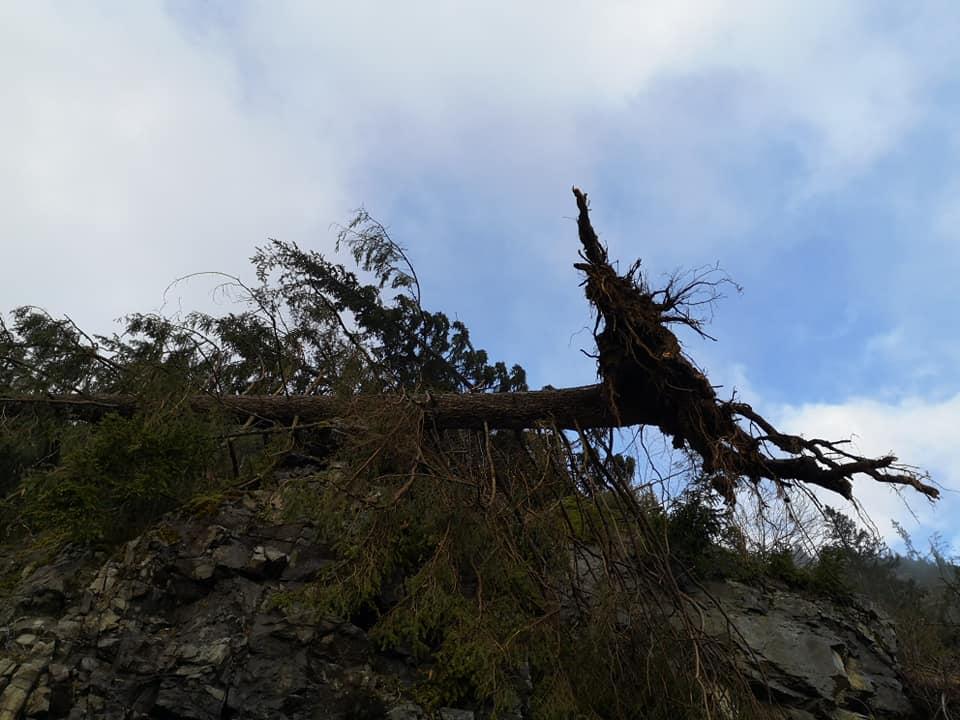 bosco distrutto a predazzo ph graziano melis7 Taglio del legname schiantato: un grave pericolo per gli operatori