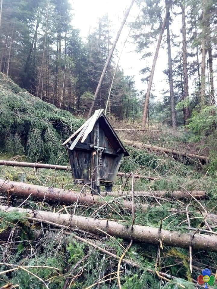 el cristo del bosco Taglio del legname schiantato: un grave pericolo per gli operatori