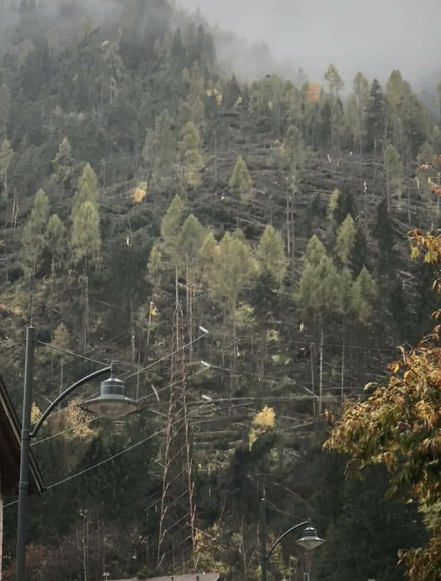 fiemme alberi caduti Diffondiamo insieme il profumo del bosco