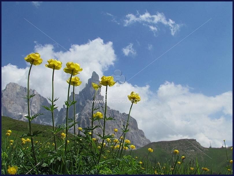 dolomiti unesco cimon della pala Dolomiti UNESCO, i Sostenitori si incontrano a Predazzo