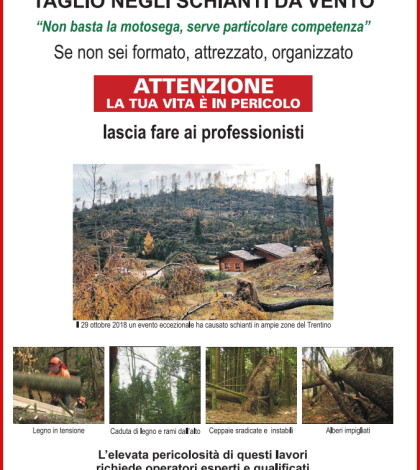 taglio bosco da vento pericolo