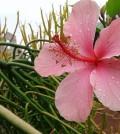 fiore suor delia