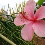 fiore suor delia 150x150 Avvisi Parrocchie 20 27 ottobre 2019   Saluto di suor Delia Guadagnini