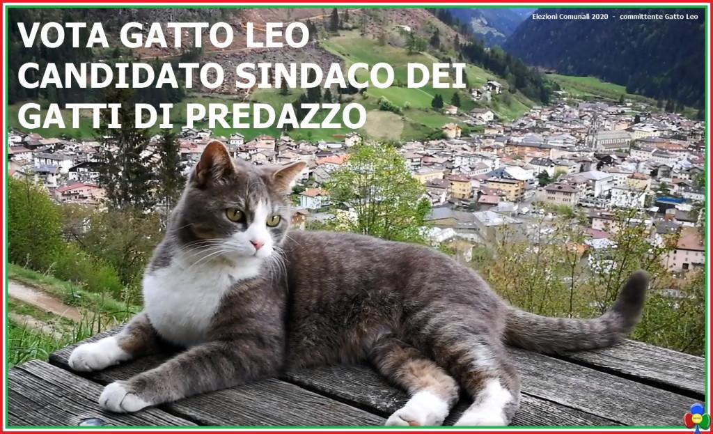 elezioni comunali 2020 candidato sindaco gatto leo predazzo 1024x623 Gatto Leo, candidato sindaco per i gatti di Predazzo