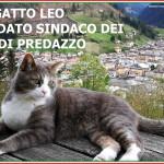 elezioni comunali 2020 candidato sindaco gatto leo predazzo 150x150 Gatto Leo vince le elezioni: Sarò il Sindaco di tutti i gatti di Predazzo
