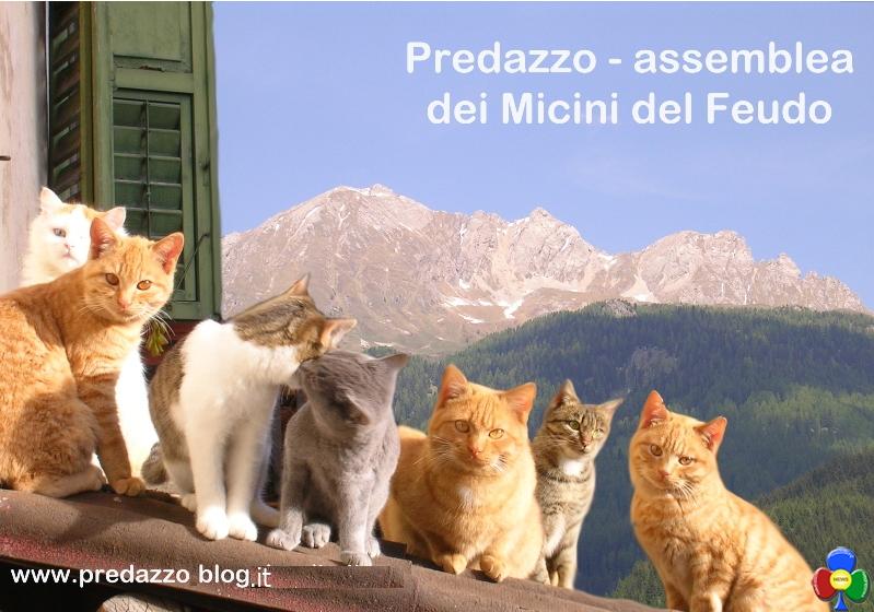 micini del feudo assemblea Gatto Leo vince le elezioni: Sarò il Sindaco di tutti i gatti di Predazzo